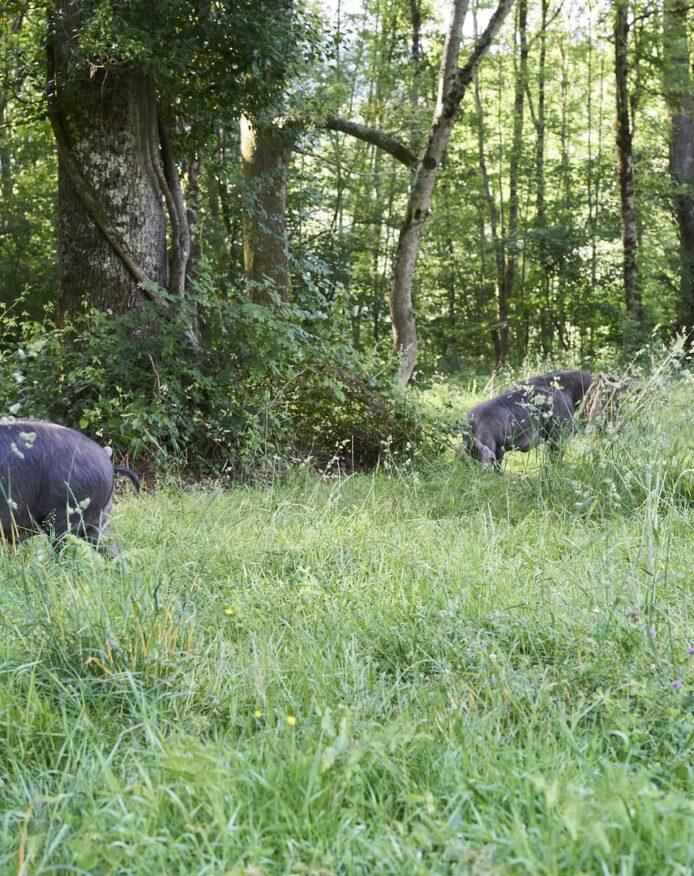 Domaine Herbae porc noir de Bigorre AOP